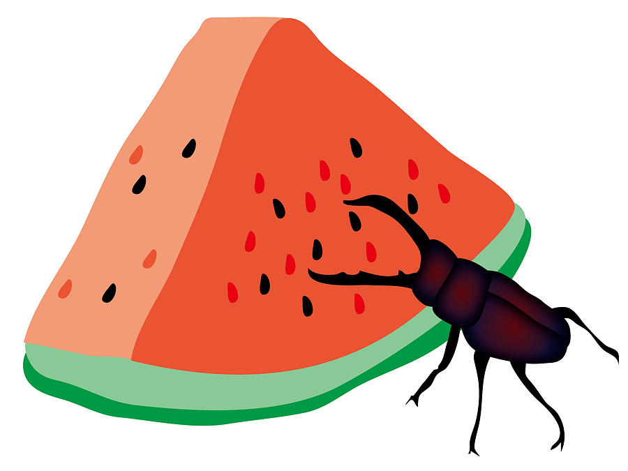 Stag Beetle Is Eating A Piece Of Red Watermelon Digital Art by Moto-hal