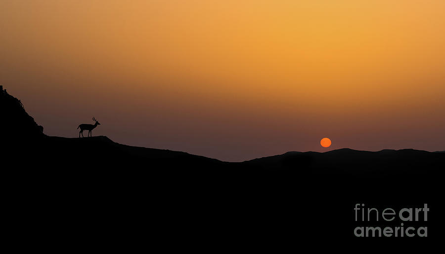 Sunset Photograph - Stag Silhouette by Shaun Wilkinson