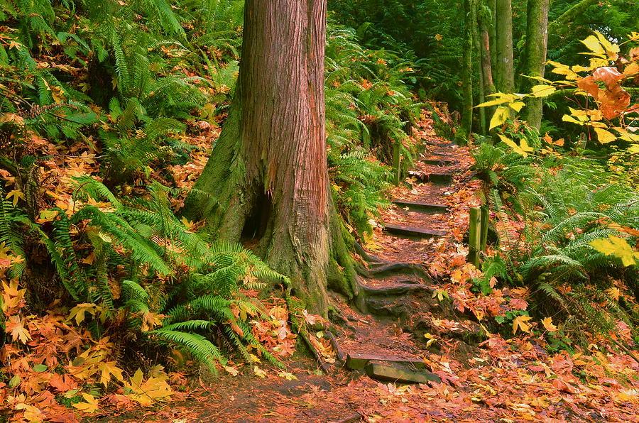 Woods Photograph - Stairway Forgotten by Robert Evans