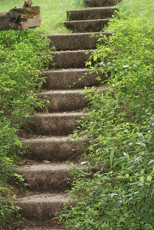 Nature Photograph - Stairway To Heaven by Heather Green