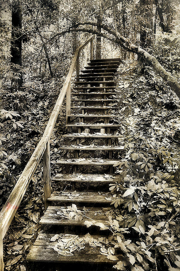 Nature Photograph - Stairway To The Unknown by Gulf Island Photography and Images