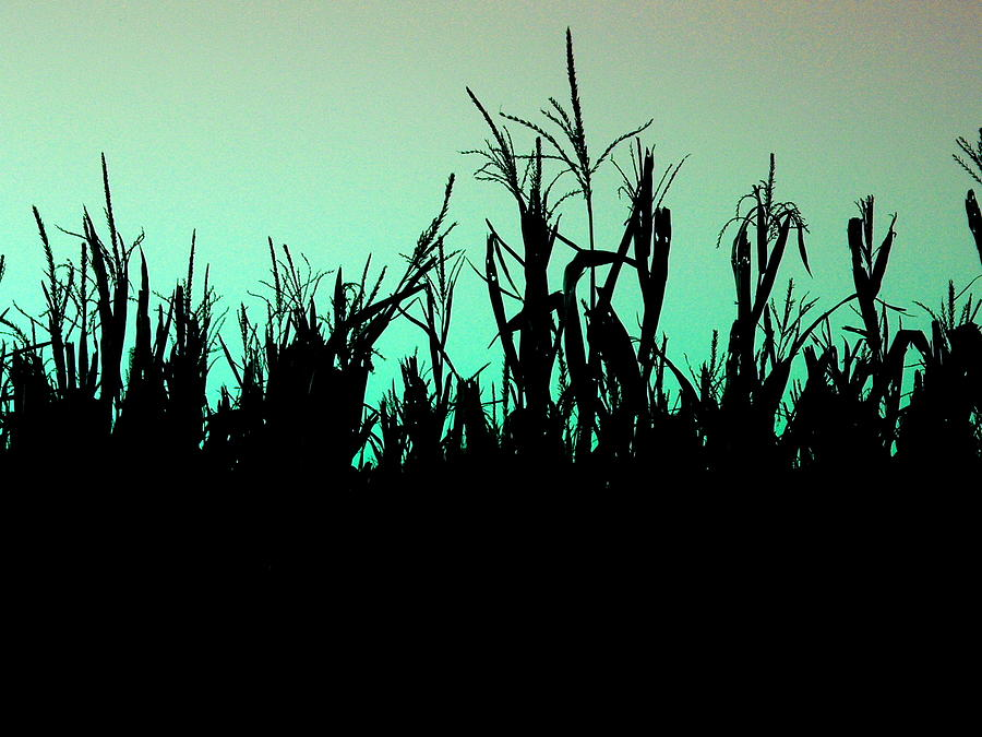 Corn Photograph - Stalker by M Pace