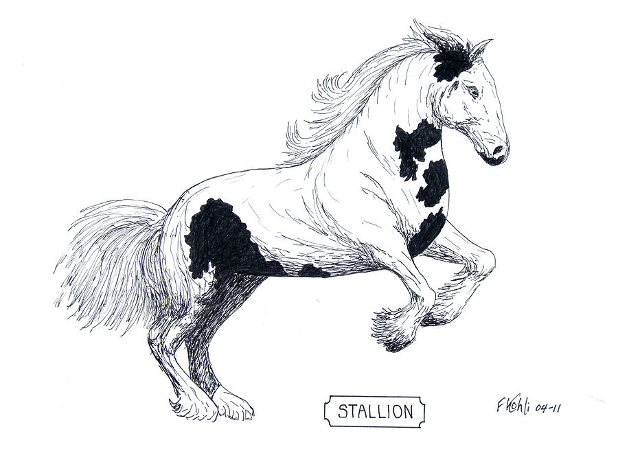 Stallion Drawing by Frederic Kohli