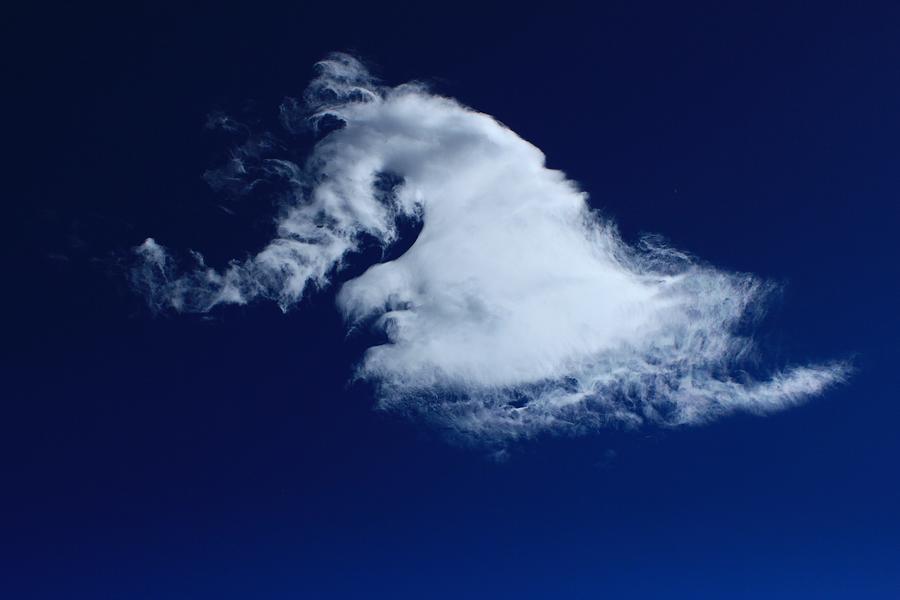 Horses Photograph - Stallions Neck cloud by Jim Cotton