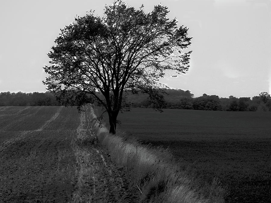 Black And White Photograph - Stand Alone by Peter May