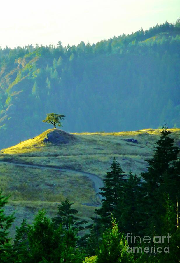 Lone Tree Photograph - Standing Alone by JoAnn SkyWatcher