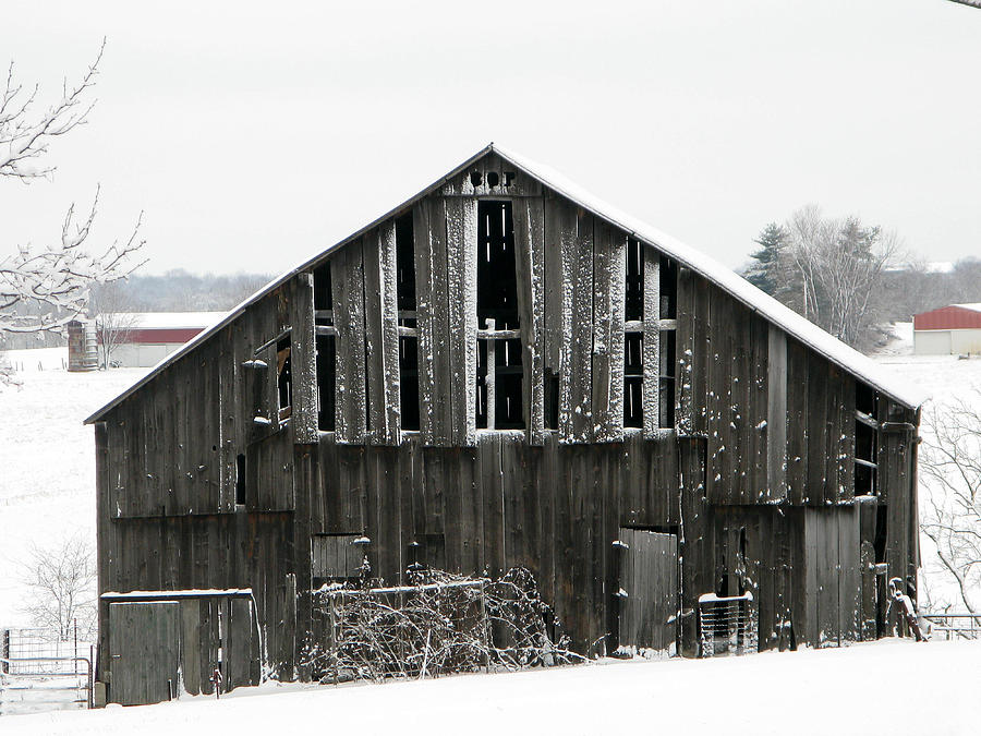 Barn Photograph - Standing Alone by Martie DAndrea