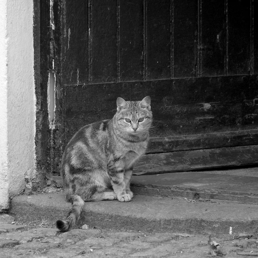 Cat Photograph - Standing Guard by Mike McGlothlen