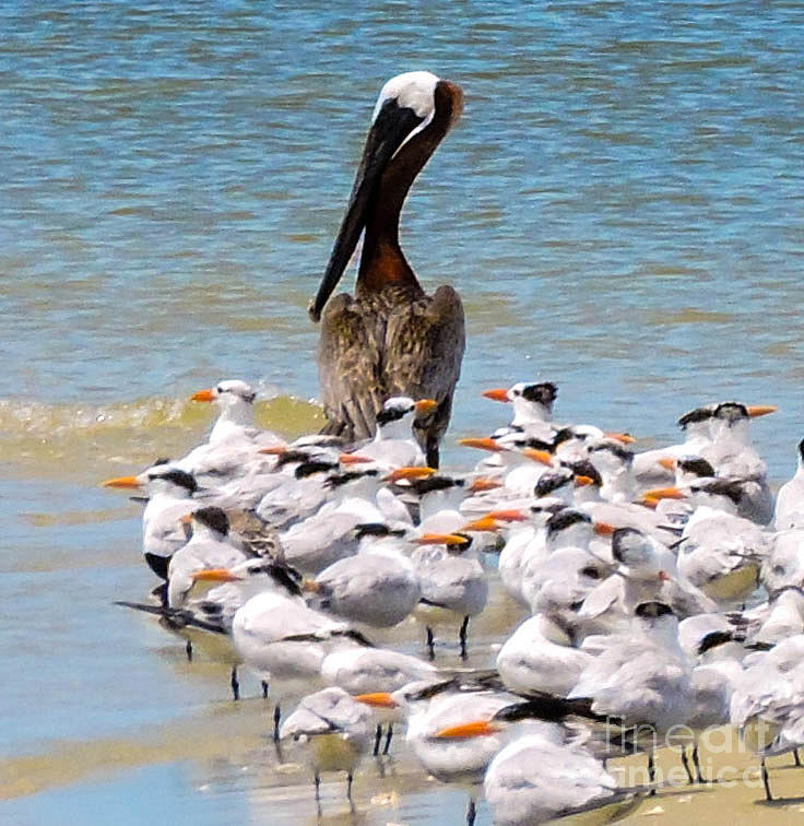 Shorebirds Photograph - Standing On Point by Marilee Noland