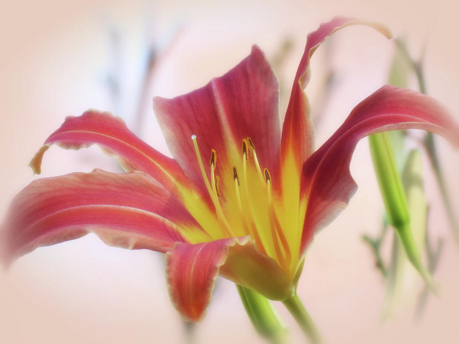Standing Out - Daylily by MTBobbins Photography