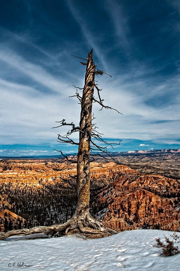 Blue Photograph - Standing Regardless by Christopher Holmes