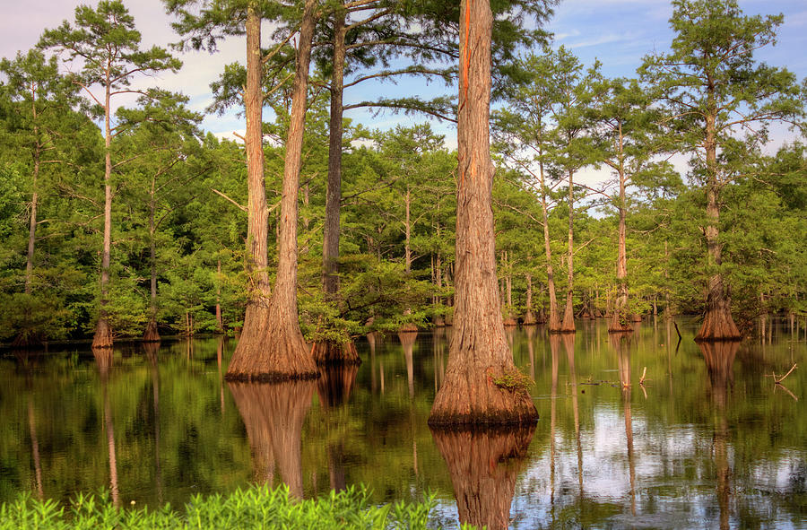 Bayou Photograph - Standing Strong by Ester McGuire