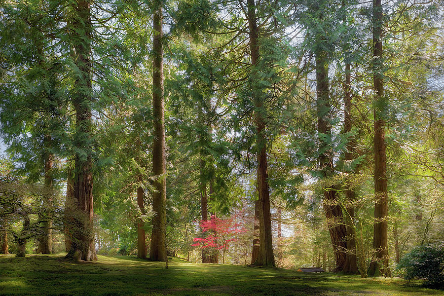 Trees Photograph - Standing Tall Amongst The Giants by David Gn