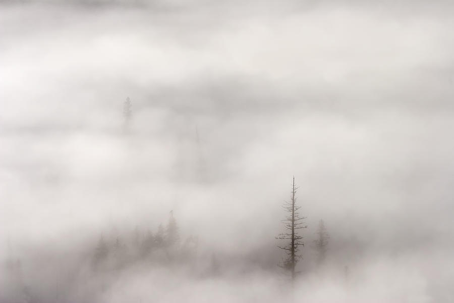 A Few Tall Trees Standing Tall Among The Rising Mist And Fog Of A Crisp October Morning In Th Wenatchee National Forest In Washington Photograph - Standing Tall by Mike  Dawson