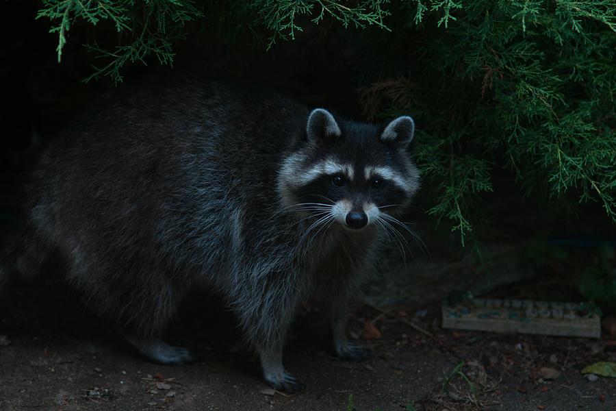 Animal Photograph - Standoff by Craig Hosterman