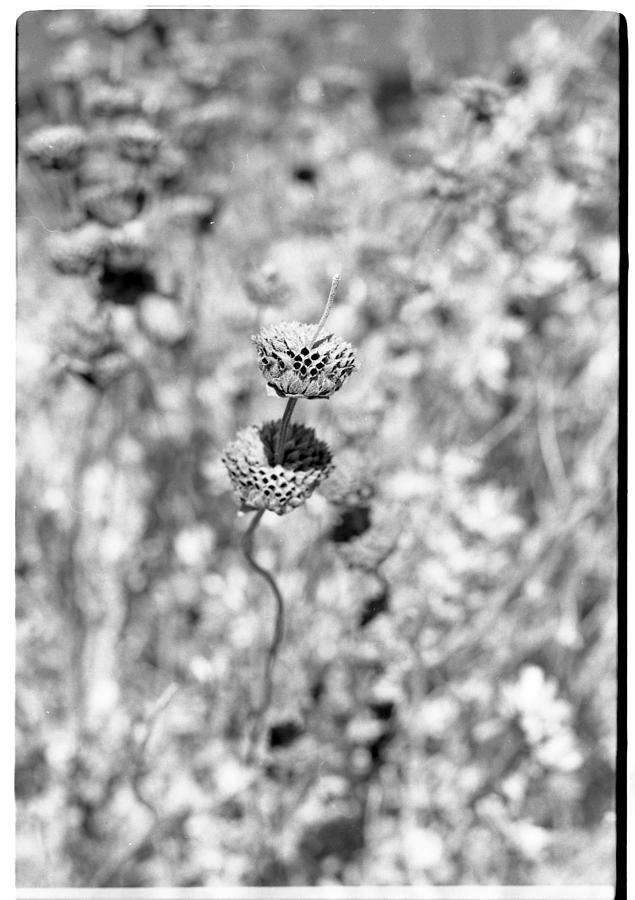 Flower Photograph - Standout Dead by Salvatore Corcione