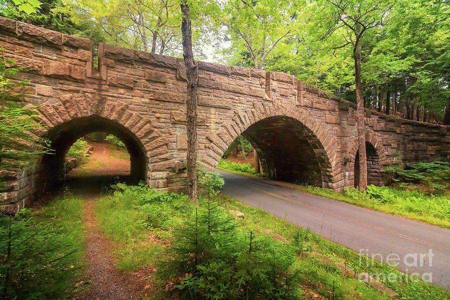 Acadia National Park Photograph - Stanley Brook Bridge by Elizabeth Dow
