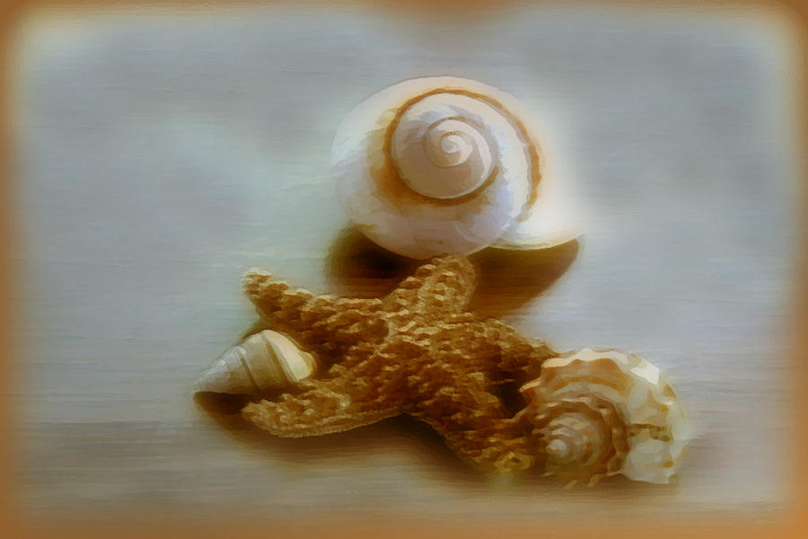 Seashells Photograph - Star And Shells by Linda Sannuti