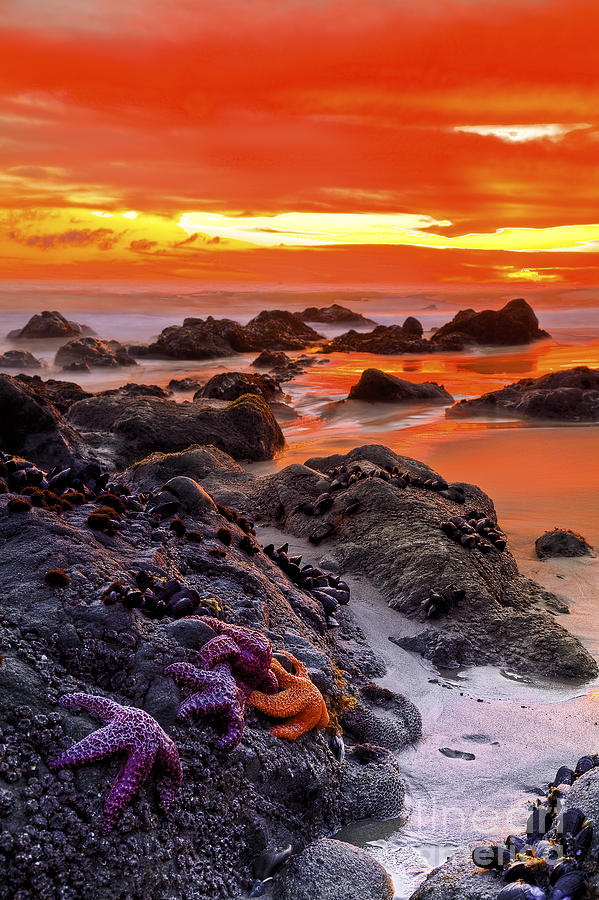 Beaches Photograph - Star Gathering by Greg Clure