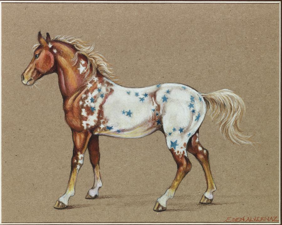 Horse Drawing - Star Spangled Horse by Eden Alvernaz