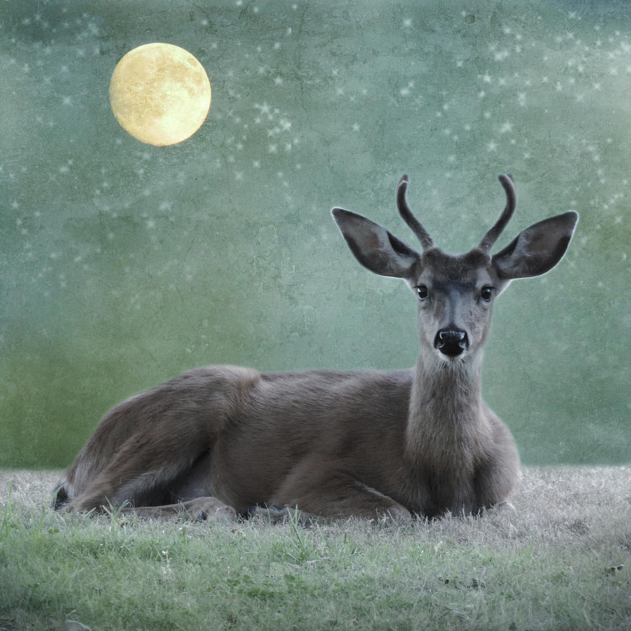 Stardust Deer by Sally Banfill