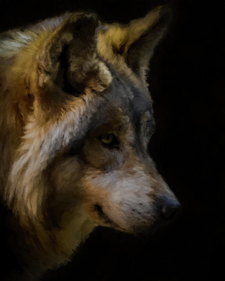 Wolf Digital Art - Stare Of The Wolf 2 by Ernie Echols