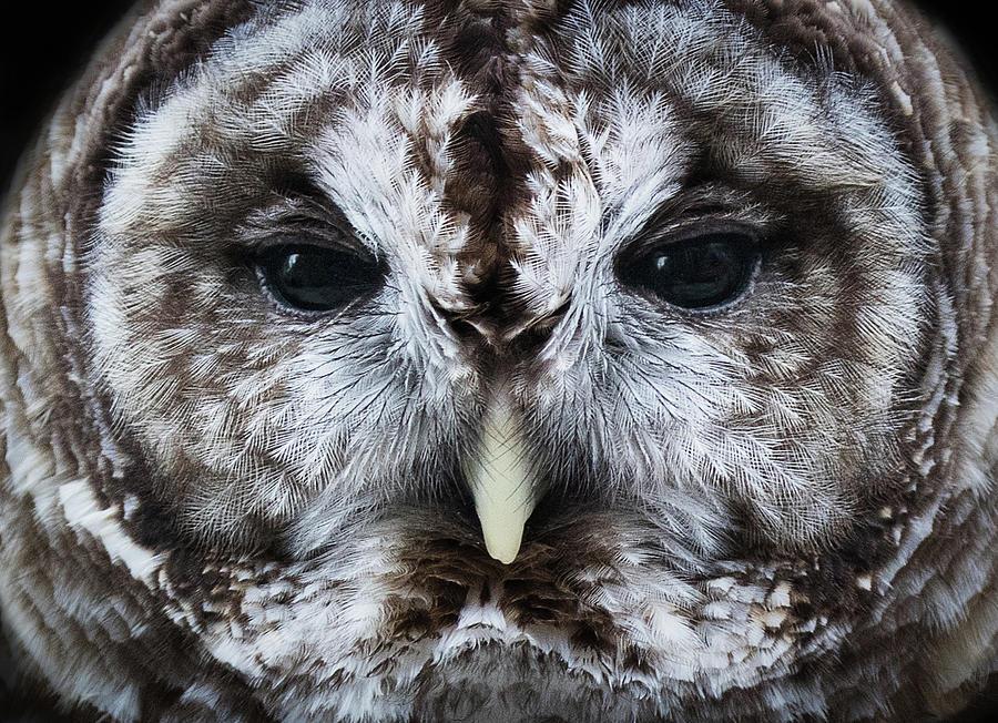 Staredown by Bruce Bonnett