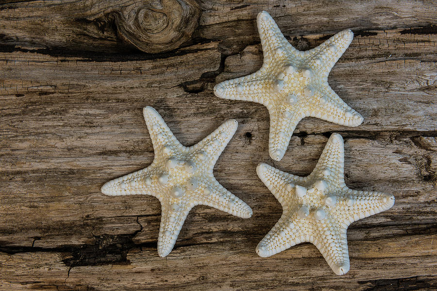 Starfish and Driftwood by Randy Walton