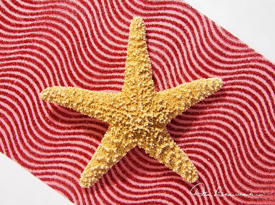Starfish And Ribbon 4144 Photograph