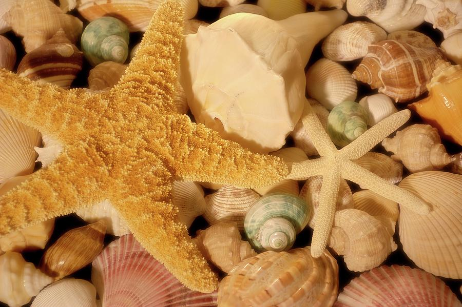 Starfish and Seashells by Angie Tirado