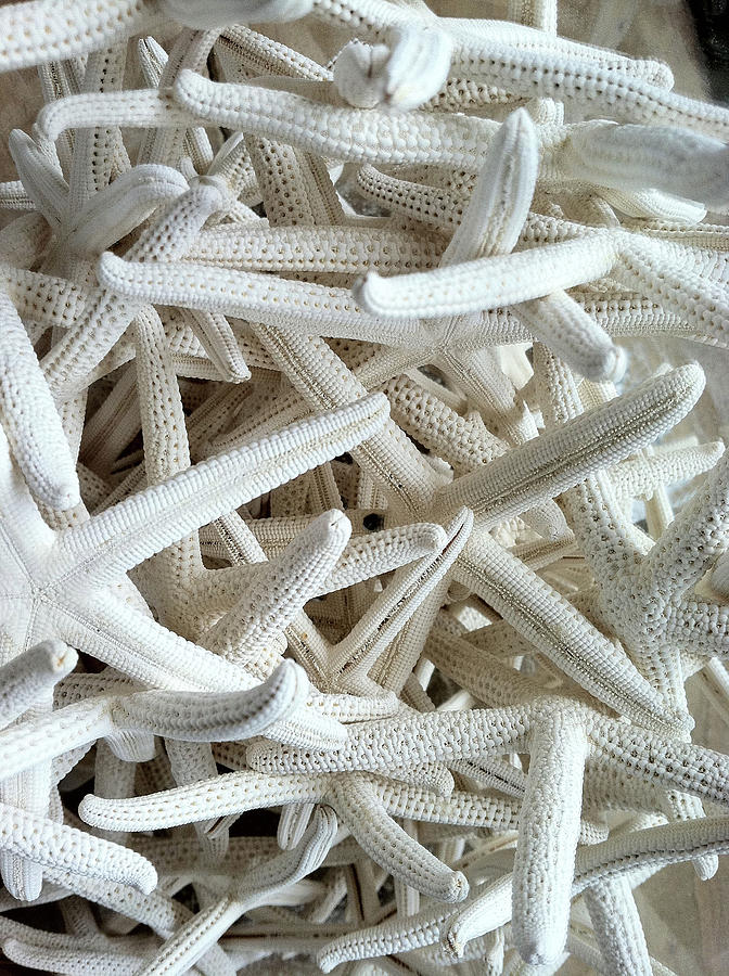 Starfish Photograph - Starfish Heaven by Richard Mansfield