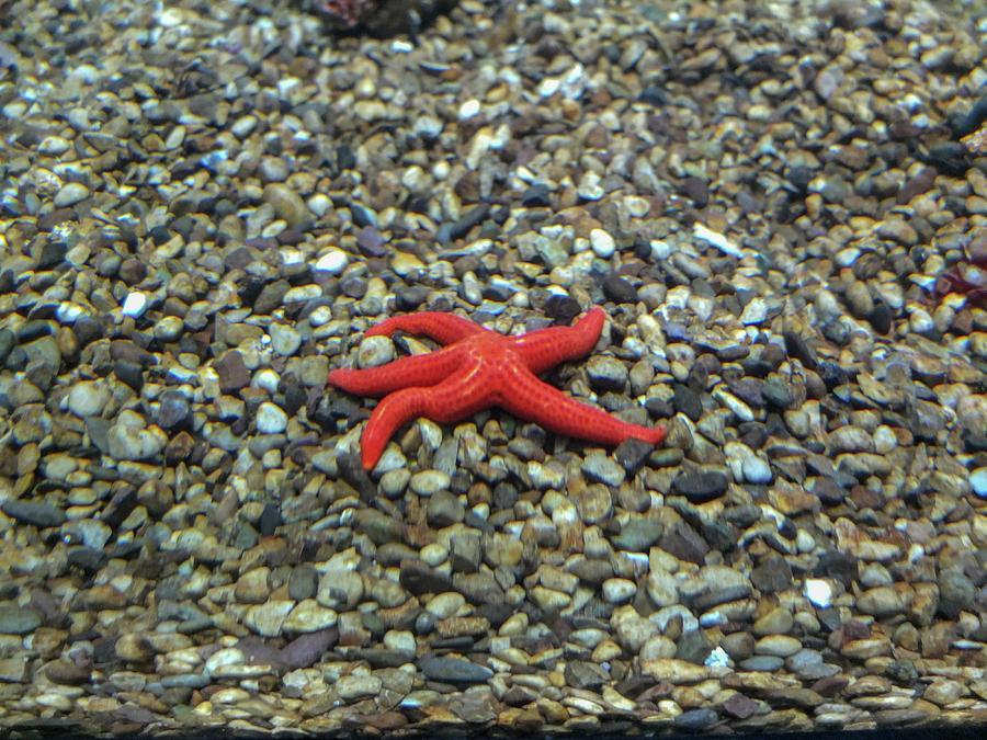 Starfish Photograph - Starfish by Olga Kurygina