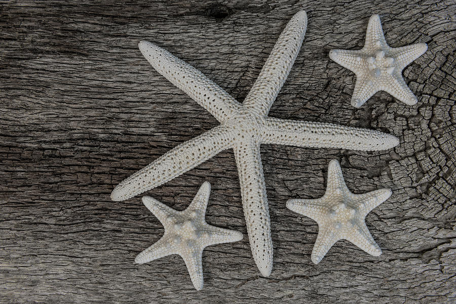 Starfish on Driftwood by Randy Walton