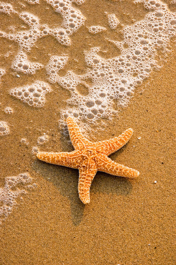 Starfish On The Beach Photograph by Utah Images