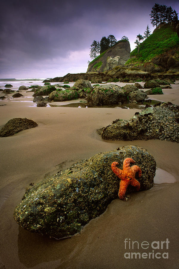 America Photograph - Starfish On The Rocks by Inge Johnsson