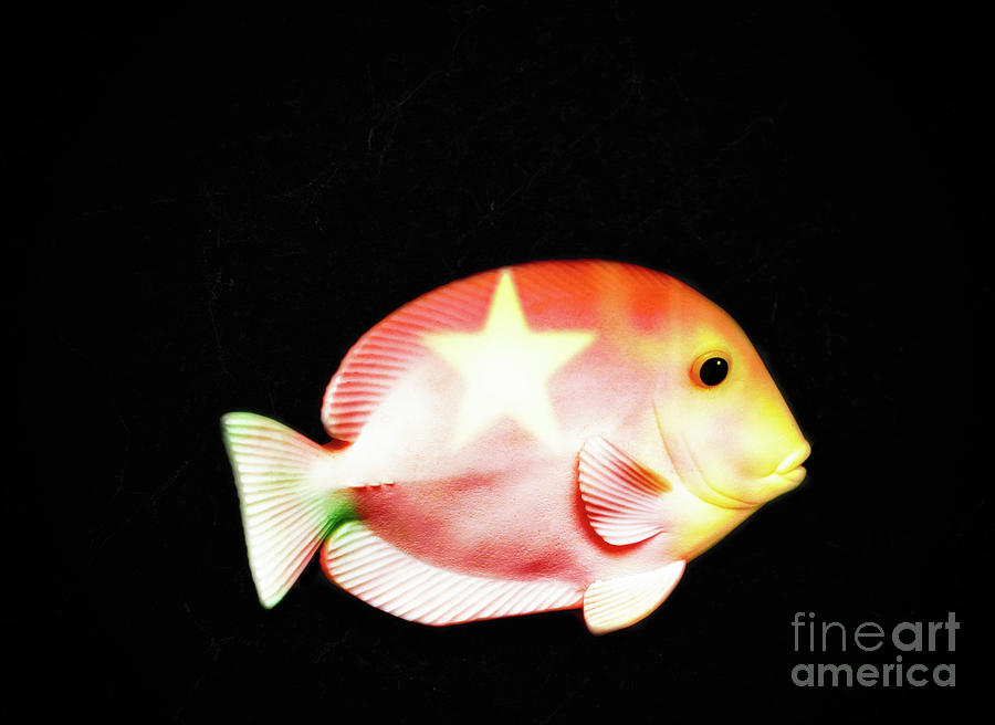 Fish Photograph - Starfish  by Steven Digman