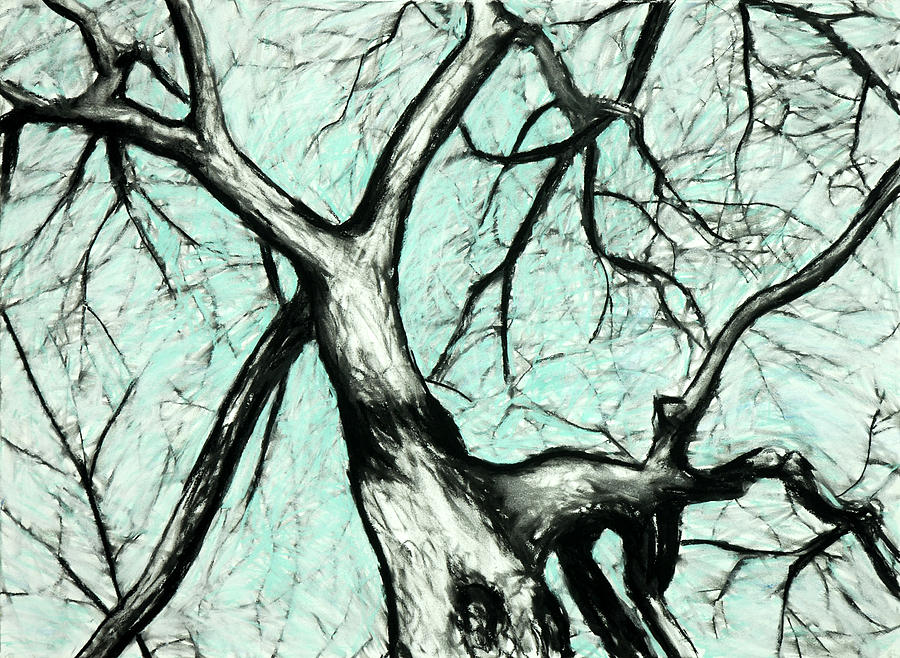 Tree Drawing - Stark Treetop by John Terwilliger
