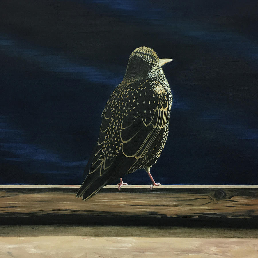 Starling Painting - Starling by Elisenda Vila