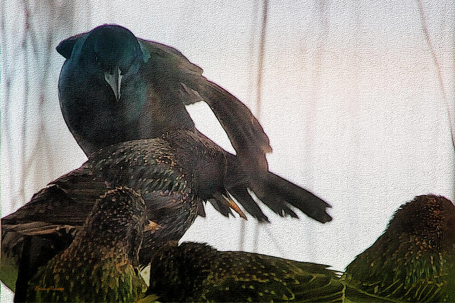 Watercolor Photograph - Starlings And The Grackle by Ericamaxine Price