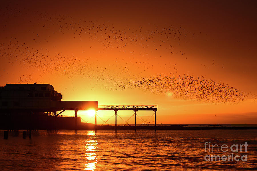 2016 Photograph - Starlings At Sunset Over Aberystwyth Pier by Keith Morris