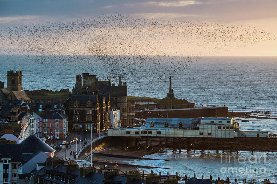 Aberystwyth Photograph - Starlings Over Aberystwyth On The West Wales Coast by Keith Morris