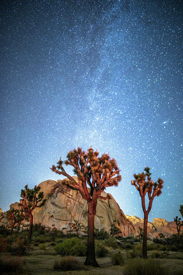 Starry Night Photograph