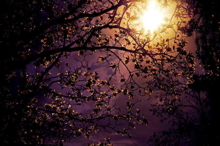 Pretty Photograph - Stars In An Earthly Sky by Vivienne Gucwa