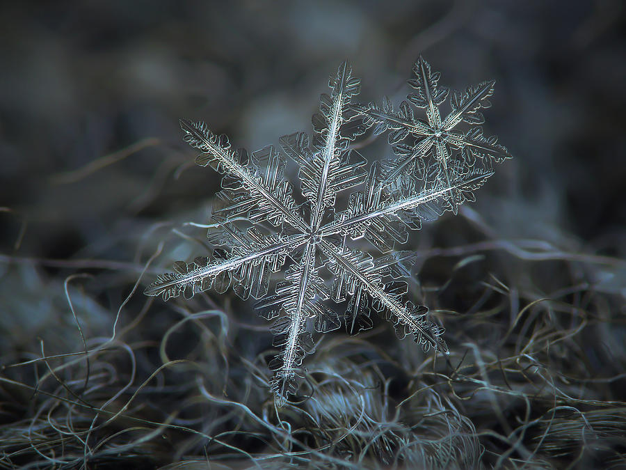 Snowflake Photograph - Stars In My Pocket Like Grains Of Sand by Alexey Kljatov