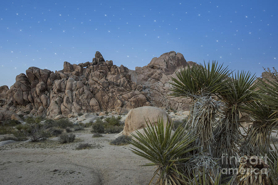 Arid Photograph - Stars Shining Over Indian Cove by Juli Scalzi