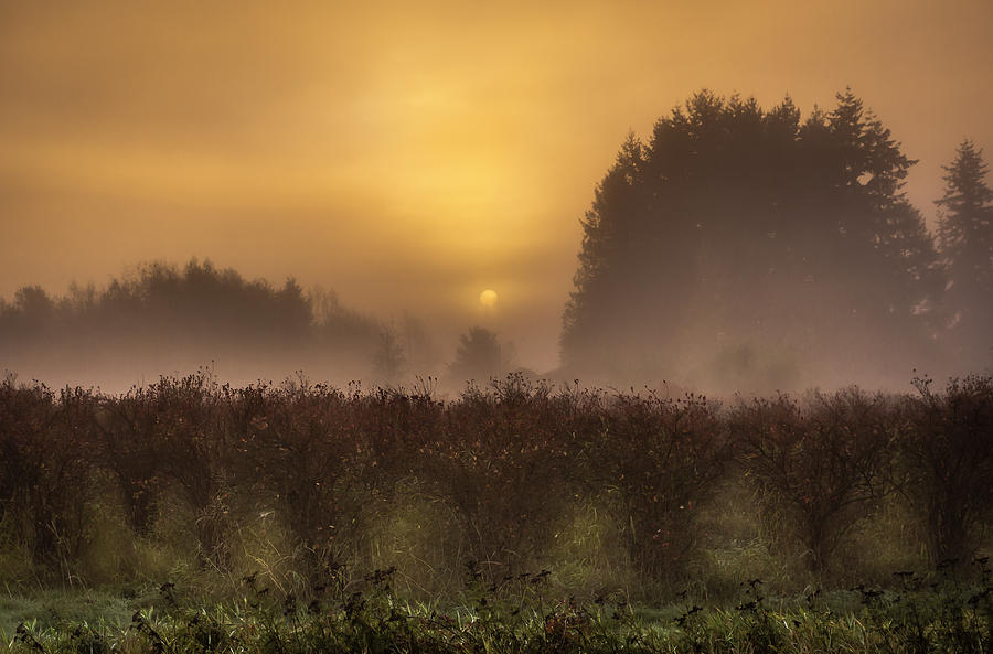 Washington Photograph - Start Of A New Day by Blanca Braun