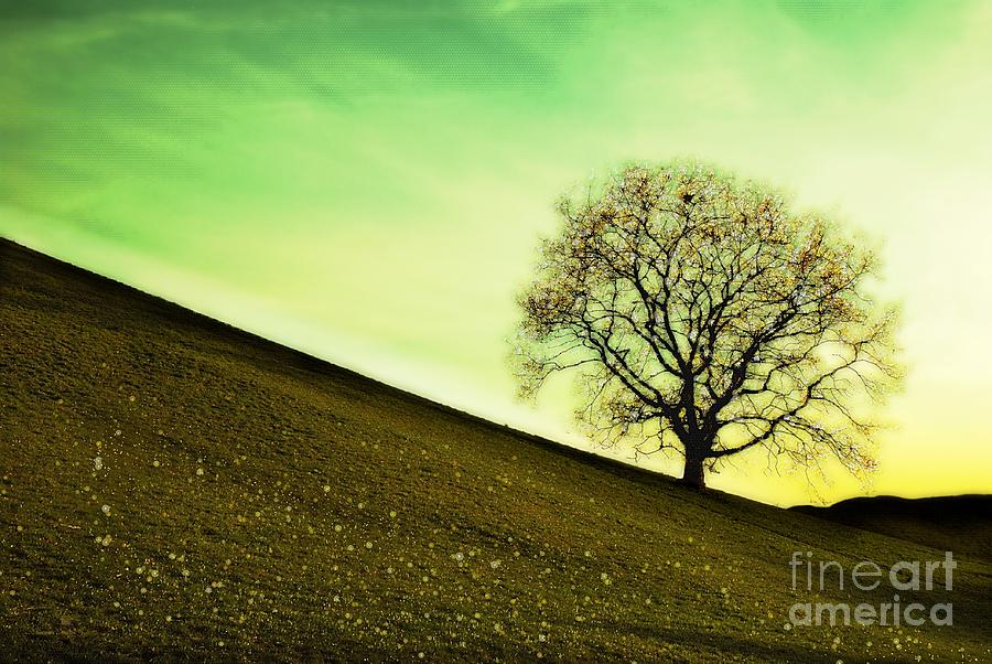 Landscape Photograph - Starting Springtime by Hannes Cmarits