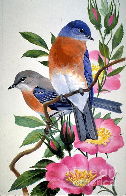 Bird Painting - State Bird And Flower Of New York by Alan Singer  Arthur Singer