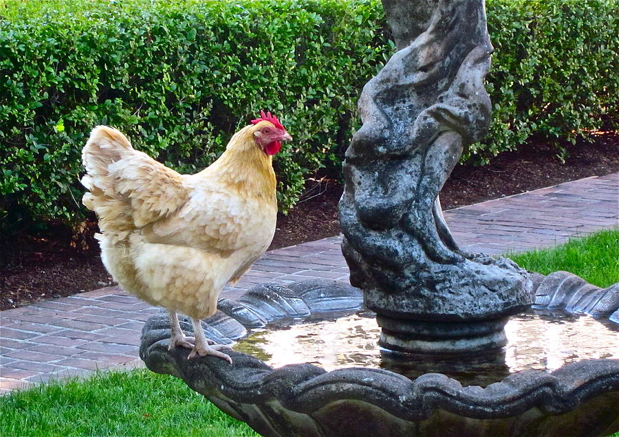 Garden Photograph Photograph - Statuesque by Gwyn Newcombe
