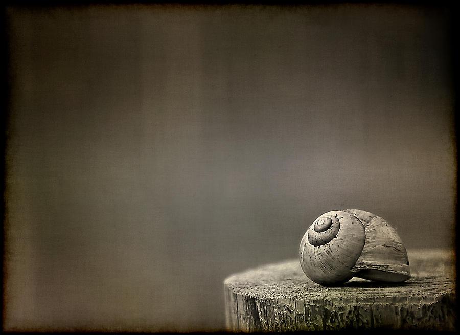 Snail Photograph - Stay by Evelina Kremsdorf